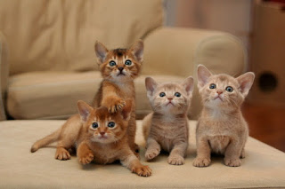 http://hubpages.com/animals/7-Habits-of-Highly-Effective-Kittens